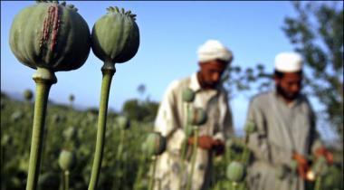 Afghanistan Opium Production Increased 43