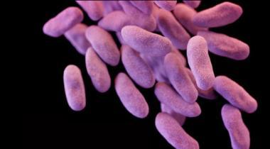 12 Bacteria Bay Qabu Ho Gaye Waqt Hath Se Nikal Raha He Aqwamay Mutehda