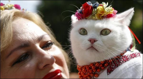 یوکرین میں بلیوں کا مقابلہ حسن