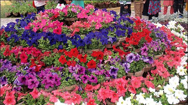 سکھرمیں پھولوں کی نمائش، رنگوں کی بہار