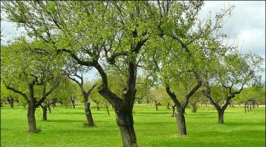 The Trees Are Prone To Obesity And Lethargy