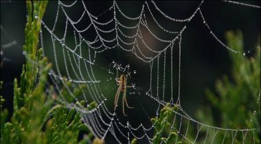 Spider Venom Good For Stroke Affected Brain Research