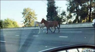 California Kay Highway Par Ghooray Dornay Lage