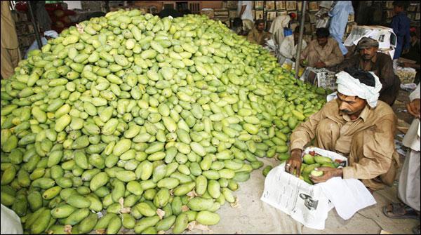 میرپورخاص میں آم کی اچھی فصل متوقع ، کاشتکاروں نے نوید سنادی