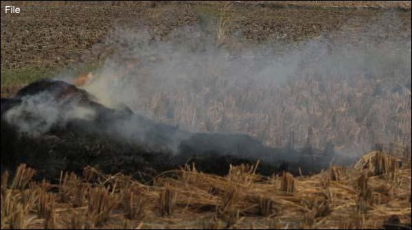 شجاع آباد:4 ایکڑ رقبے پر لگی گندم کی فصل جل گئی