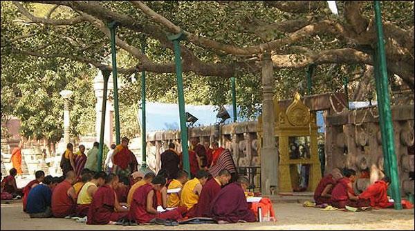 Bahar Ka 2600 Saal Purana Mahabodhi Darakht Buri Halat Mein Nahi Hai Fri