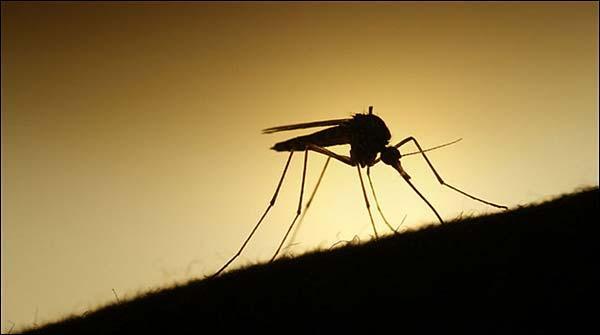 ملیریا 108ممالک سے کم ہو کر 91تک محدود