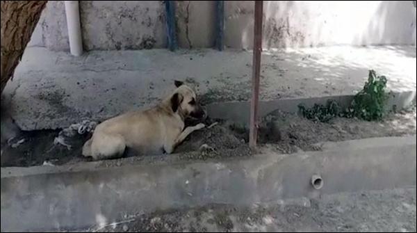 عدالت کا بچے کو کاٹنے پر کتے کو سزائے موت کا فیصلہ
