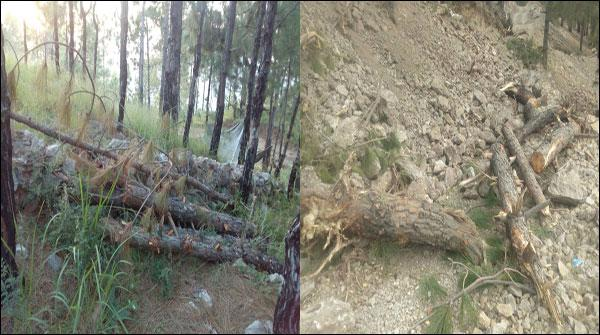 ہری پور، ہاؤسنگ سوسائٹی کیلئے سینکڑوں درخت کاٹ دیے گئے