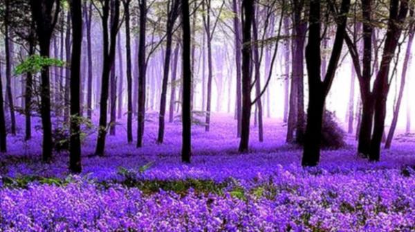 بیلجئم کا حیران کردینا والا نیلا جنگل