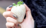 The Japanese White Strawberries Worth Their Weight In Gold