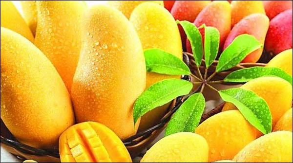 ملتان میں پھلوں کے بادشاہ آم کی 3روزہ نمائش