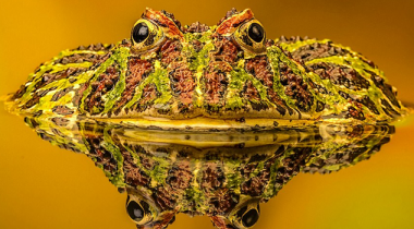 Frog Win Photography Contest