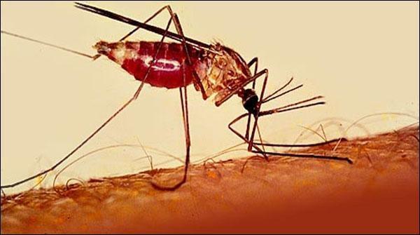 لوئر دیر میں ملیریاتیزی سے پھیلنے لگا،تشخیصی سینٹر بند