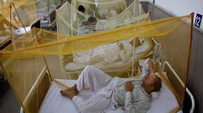 پشاور میں ڈینگی مریضوں کی تعداد 900 تک جا پہنچی