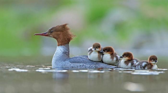 پرندوں کا تصاویری مقابلہ میکسیکو کے فوٹوگرافر کے نام