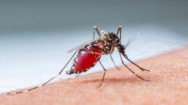 کراچی: ایک ہفتے میں 2 افراد کا ڈینگی بخار سے انتقال