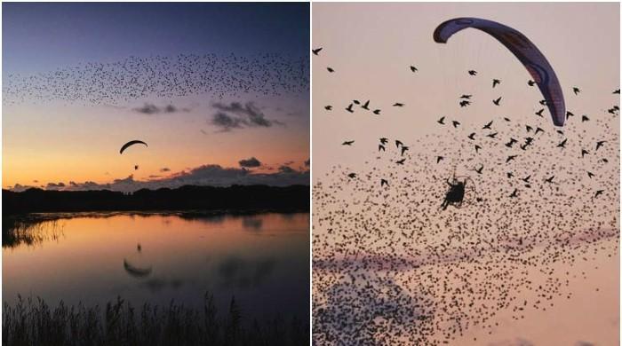 پرندوں کے جھنڈ میں پیراگلائیڈنگ کا شاندار مظاہرہ