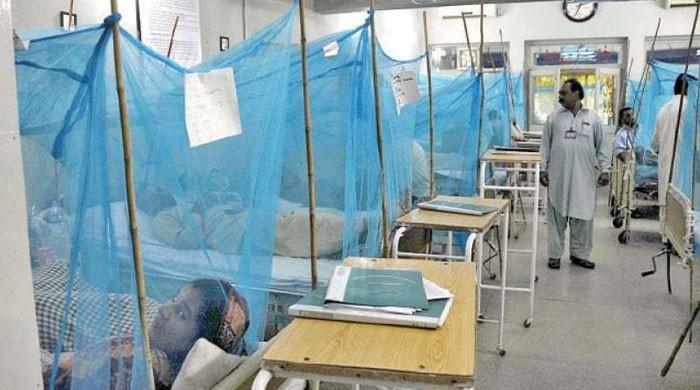 پشاور میں ڈینگی بخار سے مزید 2 افراد انتقال کرگئے