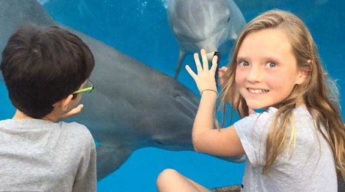بچی کی مہارت، کنگھی کی مدد سے ڈولفن کو اپنی طرف متوجہ کرلیا