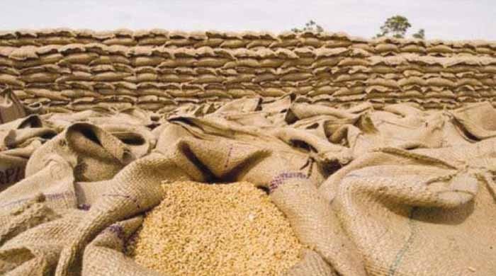 اپریل میں گندم کی برآمدات کا حجم ریکارڈ 3 لاکھ ٹن سے متجاوز