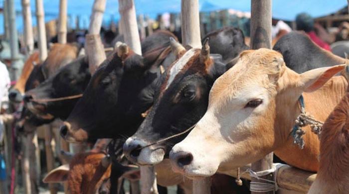بھارت میں ایک اور مسلمان گائے ذبح کرنے کے الزام میں قتل