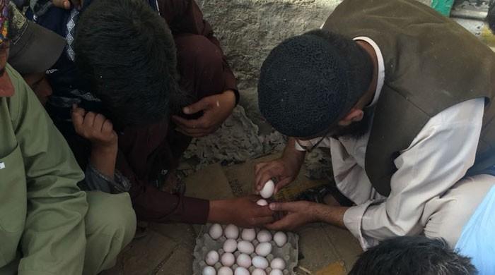 کوئٹہ میں عید کے موقع پر انڈے لڑانے کا دلچسپ کھیل