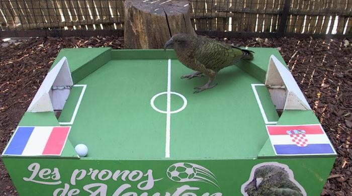 فٹبال ورلڈ کپ کا چیمیپئن کون ہوگا؟ پیرس کے طوطے نے فیصلہ سنا دیا