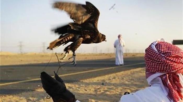بلوچستان میں جنگلی حیات کا تحفظ، تلور کے شکار کیلئے ضابطہ اخلاق پر عملدرآمد شروع