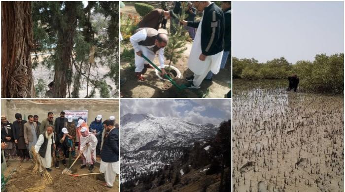 صنوبر، چلغوزے، زیتون، شینے اورمینگروو کے جنگلات بلوچستان کا حسن