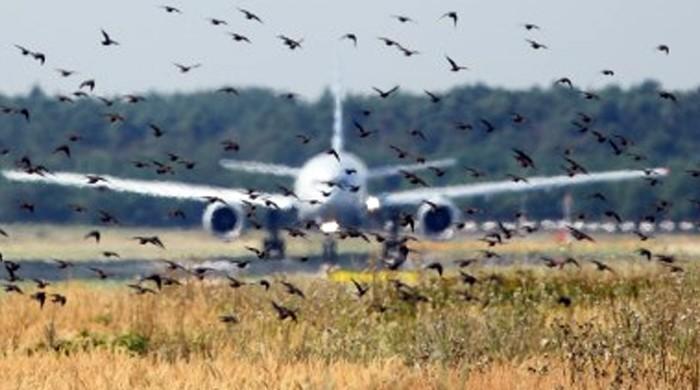 لاہور ائیرپورٹ پر پرندوں کی بھرمار سے ائیرپورٹ عارضی بند، پروازیں متاثر