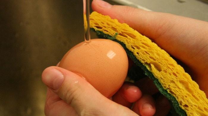 آپ بھی انڈہ پکانے سے پہلے اسے دھونے کی غلطی تو نہیں کرتے؟