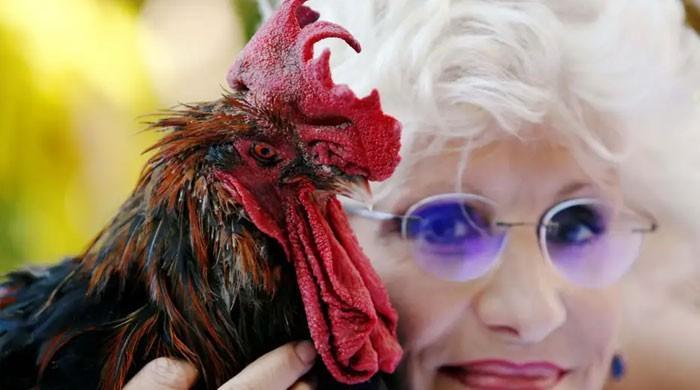 فرانس میں مرغے نے عدالتی جنگ جیت لی
