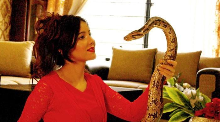 رابی پیرزادہ کو اژدھے، مگر مچھ اور سانپ پالنا مہنگا پڑگیا