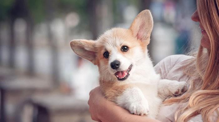 کتا پالیں اور لمبی عمر پائیں: تحقیق