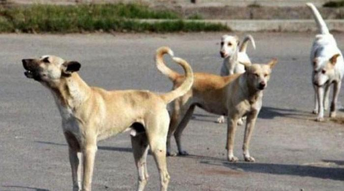 کراچی میں آوارہ کتے کے کاٹنے سے ایک اور شخص جاں بحق