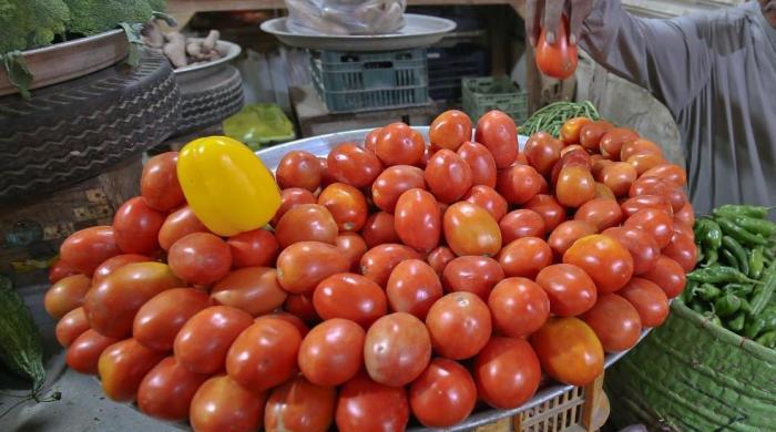 ٹماٹر کی فصل پر اسلحہ بردار پہرے دار تعینات