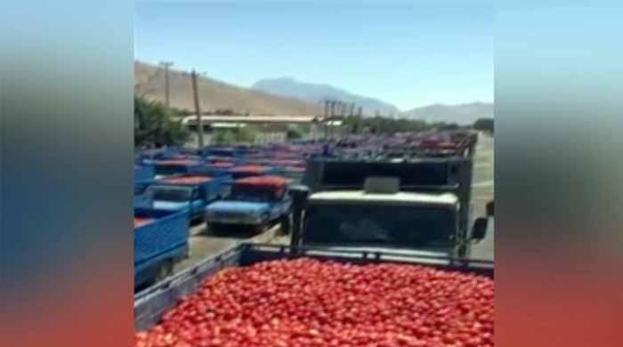 ٹماٹروں کے بحران پر قابو پانے کیلئے ایران سے ٹماٹر منگوالیے گئے