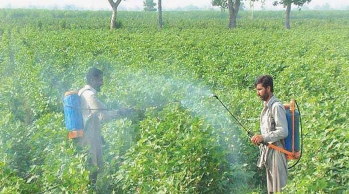 محکمہ زراعت کی گرانقدر خدمات