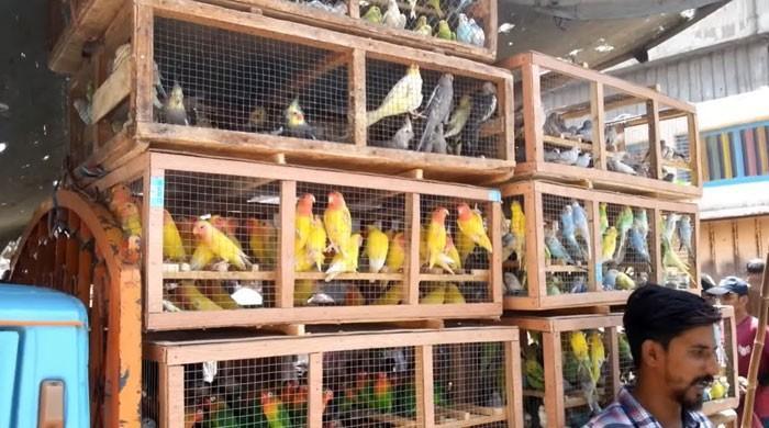 کورونا وائرس پھیلنے کا خدشہ، جانوروں اور پرندوں کی درآمد پر پابندی