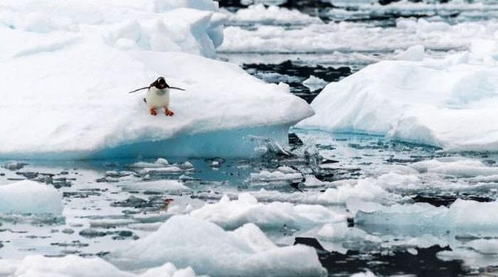 انٹارکٹیکا کی تاریخ میں پہلی بار درجہ حرارت 20 ڈگری سینٹی گریڈ سے تجاوز