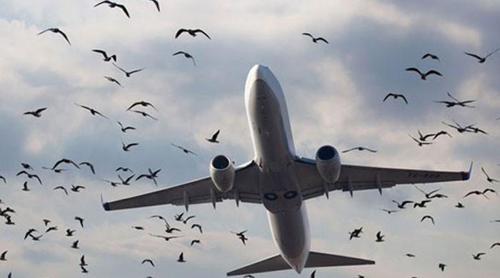 لینڈنگ گیئر جام ہونے کے بعد طیارے سے متعدد پرندے ٹکرائے، ابتدائی رپورٹ تیار