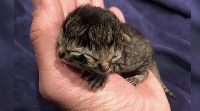 امریکا میں 2 منہ والے بلی کے بچے کی پیدائش