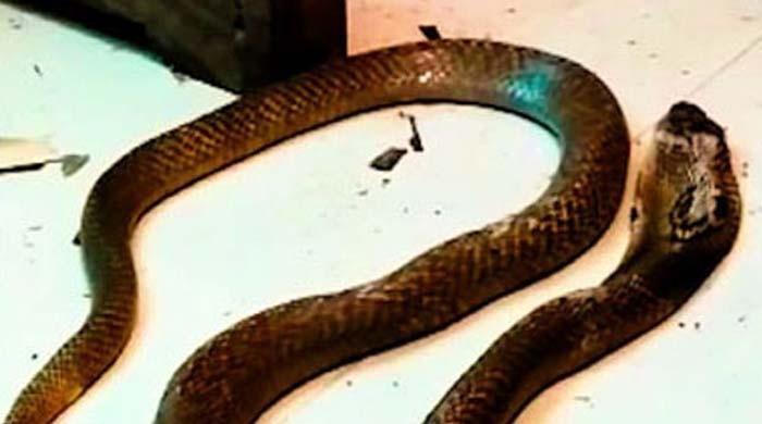 لالچی شوہر نے بیوی کی دولت ہتھیانے کیلئے سانپ سے ڈسوا کر اس کی جان لے لی