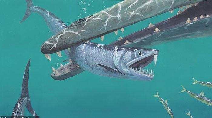 پاکستان میں دریافت ہونے والا مچھلی کا ڈھانچہ 5 کروڑ 40 لاکھ سال قدیم نکلا
