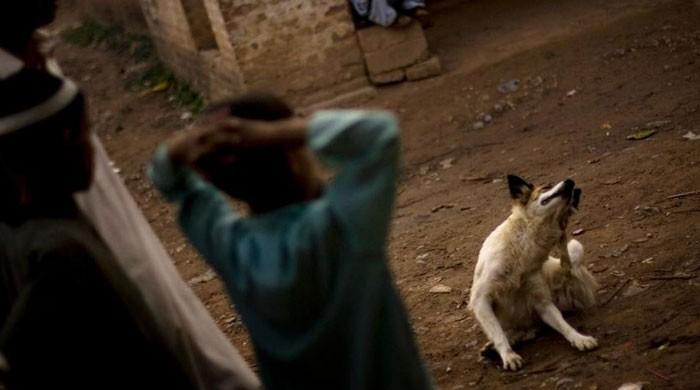 کراچی میں آوارہ کتے نے دو سالہ بچے کو بھبھوڑ ڈالا