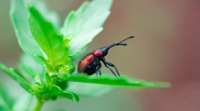 موبائل فونز حشرات الارض کے خاتمے کا باعث بن رہے ہیں؟