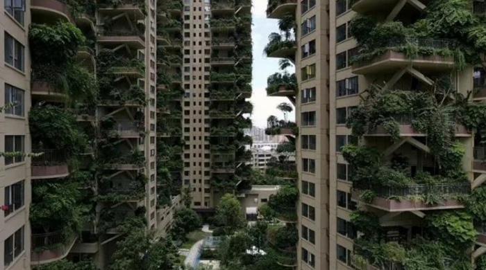 آلودگی ختم کرنے کیلئے لگائے جانیوالے درخت وبالِ جان بن گئے