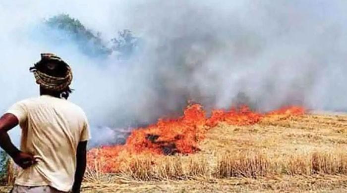 پابندی کے باوجود بھارتی پنجاب کے 12 ہزار مقامات پر فصلوں کی باقیات نذر آتش