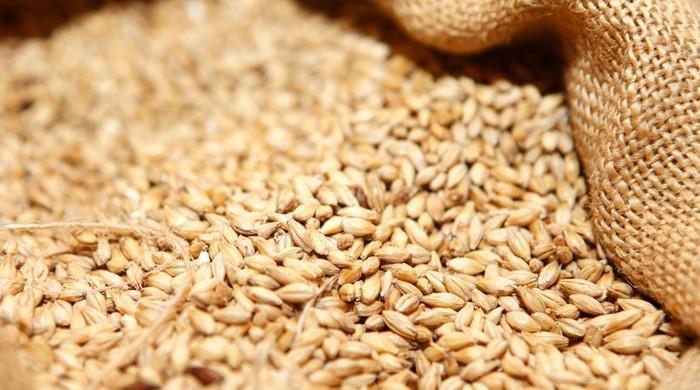 حکومت کا روس سے مزید 3 لاکھ ٹن گندم درآمد کرنے کا فیصلہ